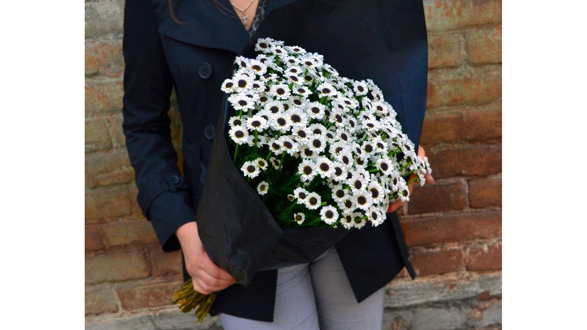 Кустовые хризантемы, с оформлением  #2